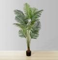 2.5ft Xelo Hawaii Palm Tree Plant