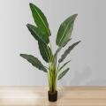 6.5ft Dani Travellers Palm Tree Plant