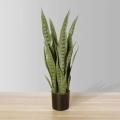 2ft Jose Snake Sansevieria Potted Plant