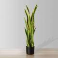 3ft Luna Snake Sansevieria Potted Plant