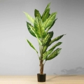 5ft Dira Evergreen Potted Plant