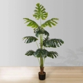 5.5ft Rita Monstera Potted Plant